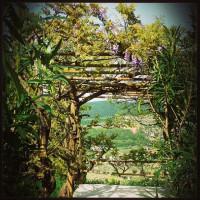 Primavera in Valpolicella @danielaballarini 2014