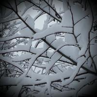 Magia della neve @danielaballarini